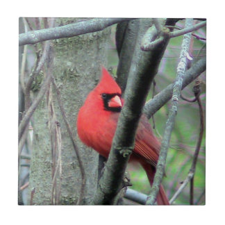 Spring Red Cardinal ( Male) Decorative Tile
