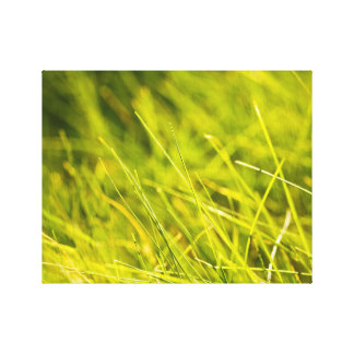 Spring relaxing grass canvas print