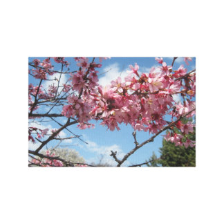 Spring Sky With Pink Blossoms Canvas Print