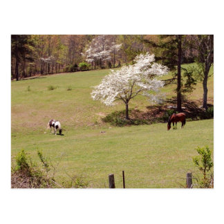 Spring time with horses postcard