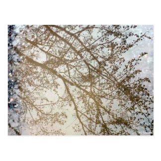 Spring Tree Reflections Bike Path Puddle Canada Postcard