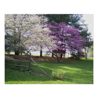 Spring Trees Poster Print