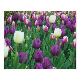 Spring Tulips Floral Poster
