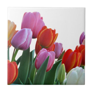 Spring Tulips Tile