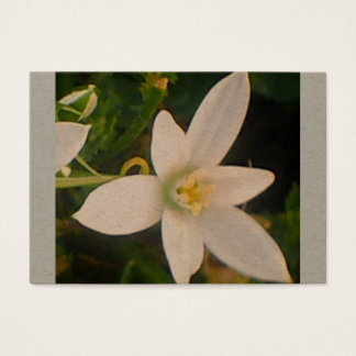 Spring White Bloom Business Card