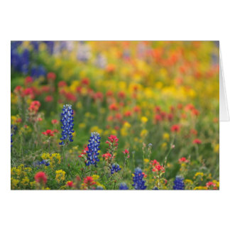 Spring Wildflowers Card
