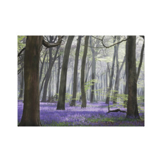 Spring Woodlands Canvas Print