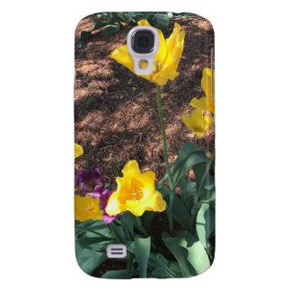 Spring yellow tulip type flowers
