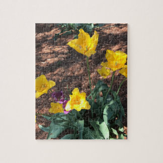 Spring yellow tulip type flowers jigsaw puzzle