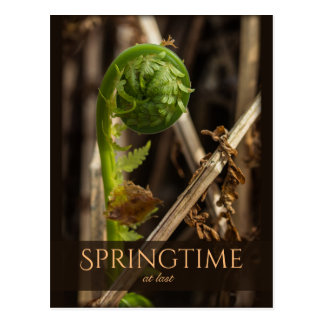 Spring Young fern rising CC0919 Beautiful nature Postcard