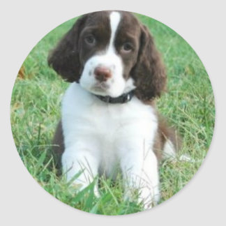 Springer Puppy Stickers
