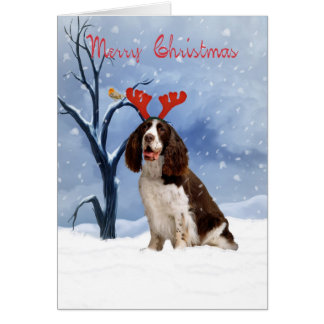 springer spaniel christmas card - springer spanie