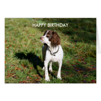 Springer Spaniel HAPPY BIRTHDAY card