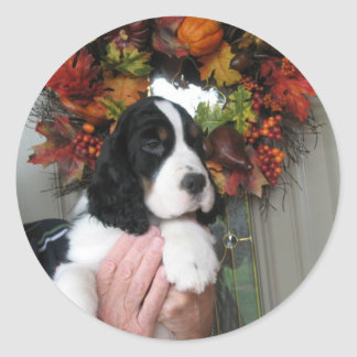 Springer Spaniel Stickers