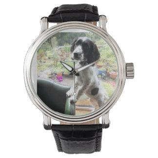 springer spaniel watch