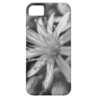 SpringFlower iPhone 5 Covers