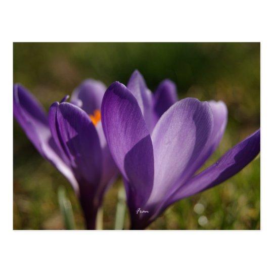 spring's back postcard