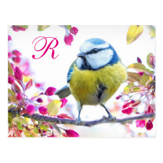 Springtime Bird Monogram Postcard