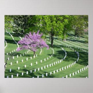 Springtime in Arlington National Cemetery Poster