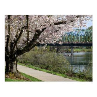 Springtime in Eugene Postcard