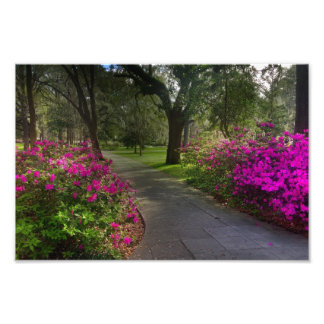Springtime In Forsyth Park, Savannah Art Photo