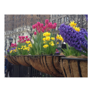 Springtime in Greeley Square NYC Flowers New York Postcard