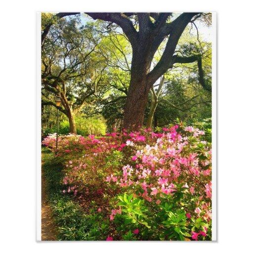 Springtime In Savannah Photo Print