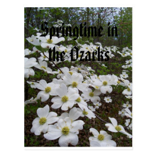 Springtime in the Ozarks Postcard