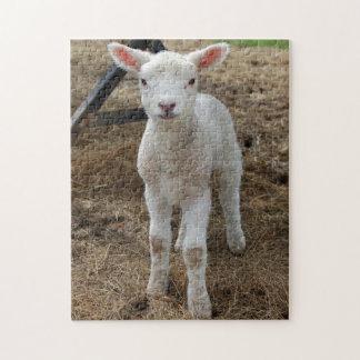 Springtime lamb jigsaw puzzle