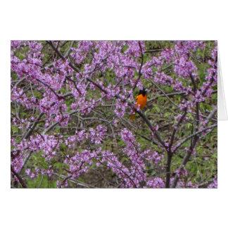 Springtime, Oriole In Redbud Tree Card
