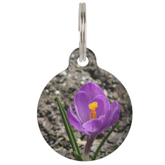 Springtime Purple and Yellow Crocus Flower Photo Pet Name Tag