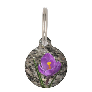 Springtime Purple and Yellow Crocus Flower Photo Pet Tags