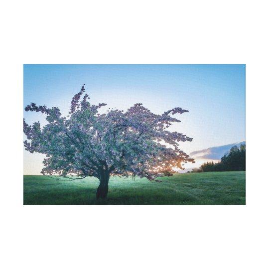 Springtime Sunrise, Flowered Tree at Dawn Canvas Print