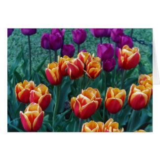 Springtime Tulips Card