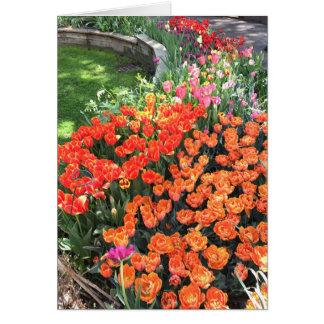 Springtime Tulips Tulip Flower NYC New York City Card