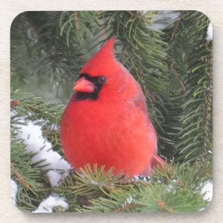 Spruce cardinal coaster