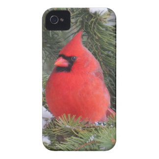 Spruce cardinal iPhone 4 covers