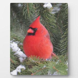 Spruce cardinal plaque