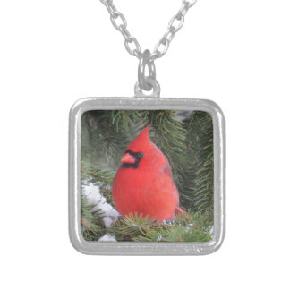 Spruce cardinal silver plated necklace