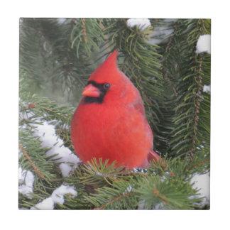 Spruce cardinal tile