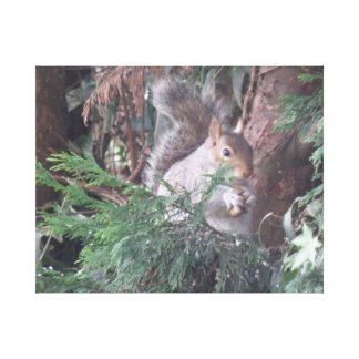 Spruce Tree Squirrel Snacking Canvas Print