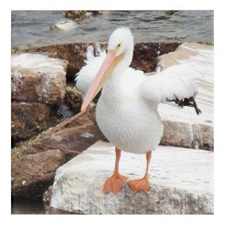 Spunky Pelican Acrylic Wall Art