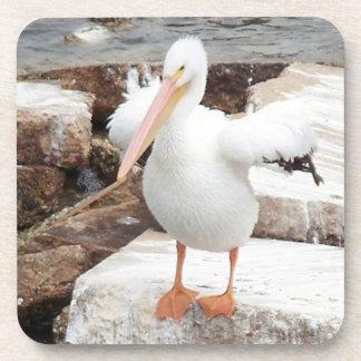 Spunky Pelican Coasters