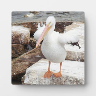 Spunky Pelican photo with easel Plaque