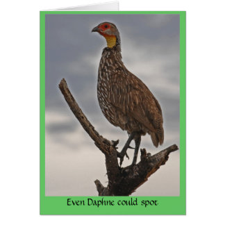 Spur-necked Fowl Card