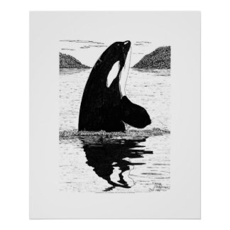 Spy-Hopping Killer Whale, Pen and Ink Poster