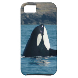 Spyhopping Orca iPhone Case