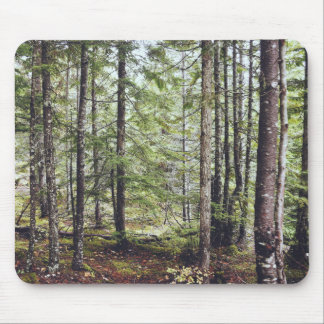 Squamish Forest Floor Mouse Pad