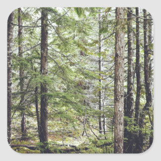 Squamish Forest Floor Square Sticker