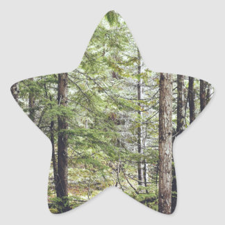 Squamish Forest Floor Star Sticker